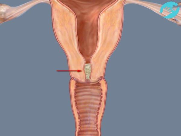Выделения при овуляции при беременности