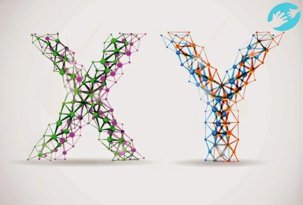 Зачатие ребенка нужного пола предопределяют X и Y хромосомы