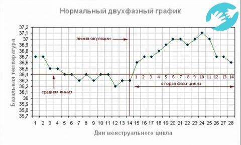 Дюфастон и базальная температура при беременности